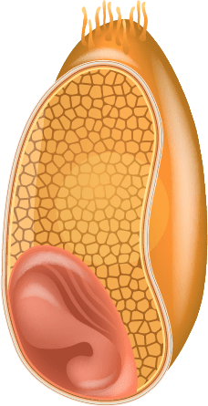 whole-cell-graphic